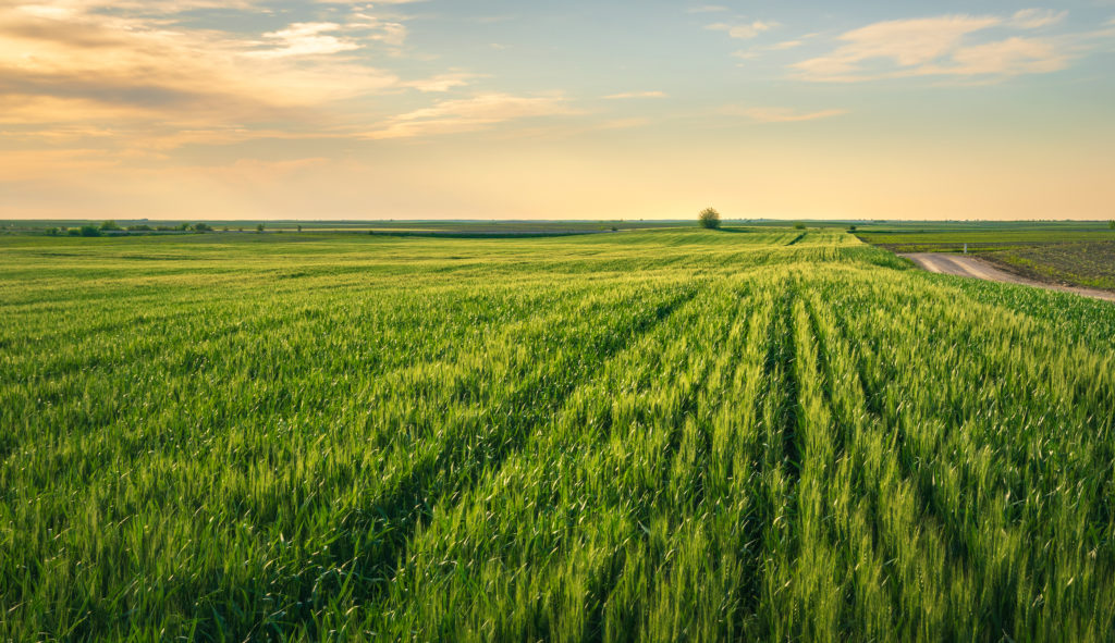 ag herbicide smart buying tips